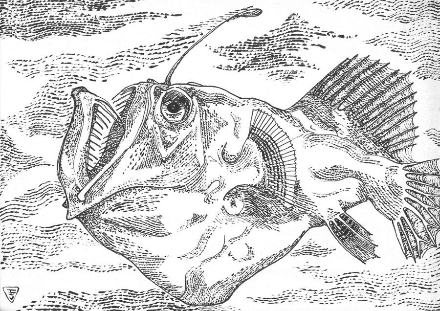 FISH-emilianovizzi_1800