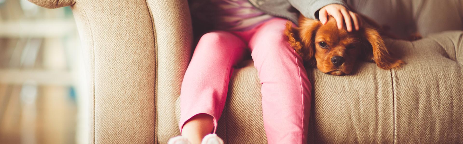 Cane sul divano con bambina, foto di Andrew Branch