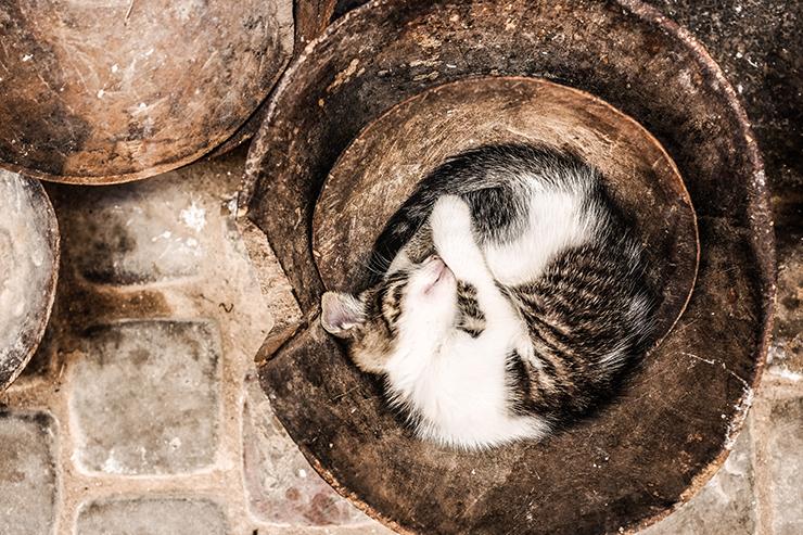 gatto addormentato Photo by Alex Pavlou on Unsplash
