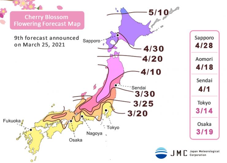 Fioritura dei Sakura in Giappone nel 2021